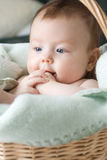 dziecko kosz obraz stock