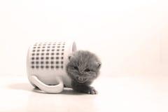 Dziecko kot w kubku Zdjęcie Royalty Free