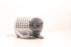 Dziecko kot w kubku Obraz Stock