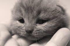 Dziecko kot z śliczną twarzą, zakończenie portret fotografia royalty free