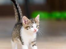 Dziecko kota Bawić się Obrazy Royalty Free