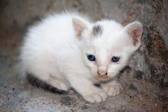 Dziecko kota biały kolor Obraz Royalty Free