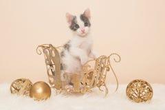 Dziecko kota bożych narodzeń scena Obraz Royalty Free