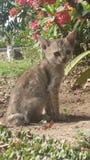Dziecko kota cutes zdjęcie royalty free