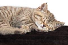 Dziecko kota dosypianie na brown dywanie Obraz Royalty Free