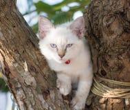 Dziecko kota niebieskie oko na drzewie Obrazy Royalty Free