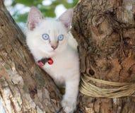 Dziecko kota niebieskie oko na drzewie Zdjęcie Stock