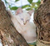 Dziecko kota niebieskie oko na drzewie Fotografia Stock