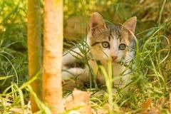 Dziecko kota portret z wewnątrz trawy Zdjęcie Stock