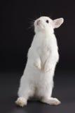dziecko królik Fotografia Stock
