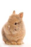 Dziecko królik zdjęcie stock