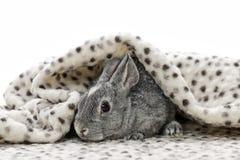 Dziecko królik Zdjęcie Royalty Free
