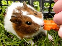 Dziecko królik doświadczalny 3 Zdjęcie Stock