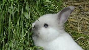 Dziecko królik patrzeje astounded z niebieskimi oczami zbiory