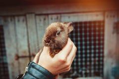 Dziecko królik w ręce Fotografia Stock