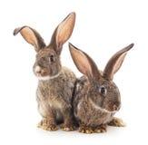 Dziecko króliki Zdjęcia Royalty Free