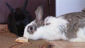Dziecko króliki siedzi wpólnie zbiory wideo