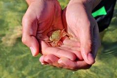 Dziecko krab na ręce Obraz Stock