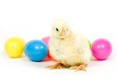 dziecko kurczaka jaj Zdjęcie Royalty Free