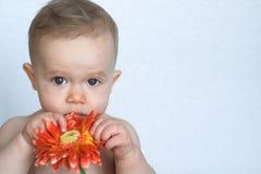 dziecko kwiat Zdjęcie Royalty Free