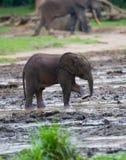 Dziecko lasu słoń Obrazy Royalty Free