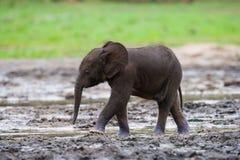 Dziecko lasu słoń Zdjęcie Royalty Free
