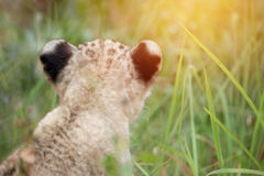 Dziecko lwa głowa strzelająca wśród zwartych traw Zdjęcia Stock