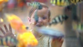 Dziecko, małej dziewczynki dopatrywanie, Patrzeje Łowi w akwarium w centrum handlowym Zwierzę domowe sklep Dziewczyn spojrzenia p zdjęcie wideo