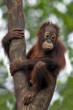 dziecko małpa Zdjęcia Royalty Free