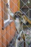 Dziecko małpa w klatce w zoo fotografia stock