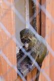Dziecko małpa w klatce w zoo zdjęcia stock