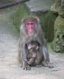 Dziecko małpa z matki małpy zoo Afryka ssaka zwierzęciem Zdjęcia Stock