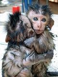 Dziecko małpy uściśnięcie Obrazy Stock