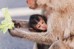 Dziecko małpa i jego matka Macierzysta małpa na drodze obraz stock