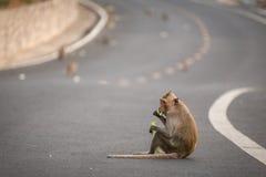 Dziecko małpa je jedzenie na drodze obraz royalty free