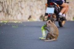 Dziecko małpa je jedzenie na drodze zdjęcia royalty free