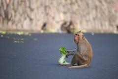 Dziecko małpa je jedzenie na drodze obrazy royalty free