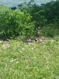 Dziecko nurkuje w trawie zdjęcia royalty free
