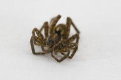 dziecko pająk obraz royalty free