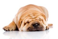 dziecko śpi shar pei psa. Obraz Stock