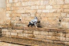 Dziecko pije od źródła wody obrazy royalty free