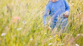 _dziecko podnosić kwitnąć na łąka zdjęcie royalty free