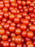 dziecko pomidorów Obrazy Royalty Free