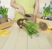 Dziecko przeflancowywa kwiatu Wiosna Proces rośliny przeszczepienie obraz stock