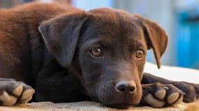 Dziecko przybłąkany pies zdjęcia royalty free