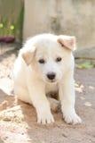 Dziecko psi biel zdjęcie royalty free