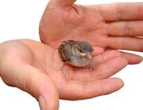 dziecko ptak Zdjęcia Stock