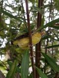 Dziecko ptak zdjęcie stock