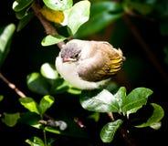 dziecko ptak Zdjęcia Royalty Free