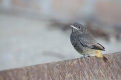 Dziecko ptak na ośniedziałym żelaznym whith szarość tle Obrazy Stock